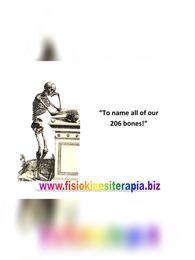 206 Bones Name List of Human Skeleton